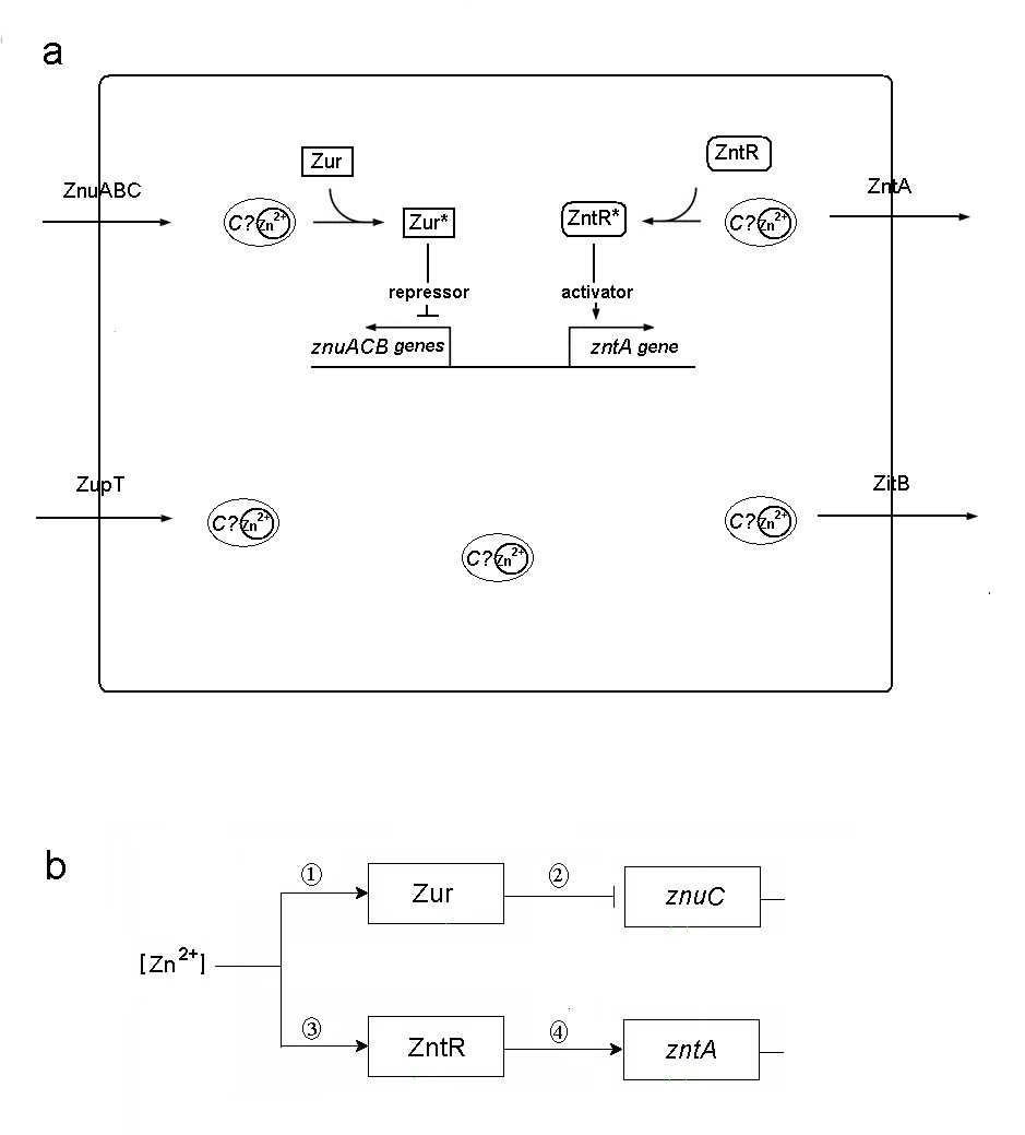 https://static-content.springer.com/image/art%3A10.1186%2F1752-0509-2-89/MediaObjects/12918_2008_Article_246_Fig1_HTML.jpg