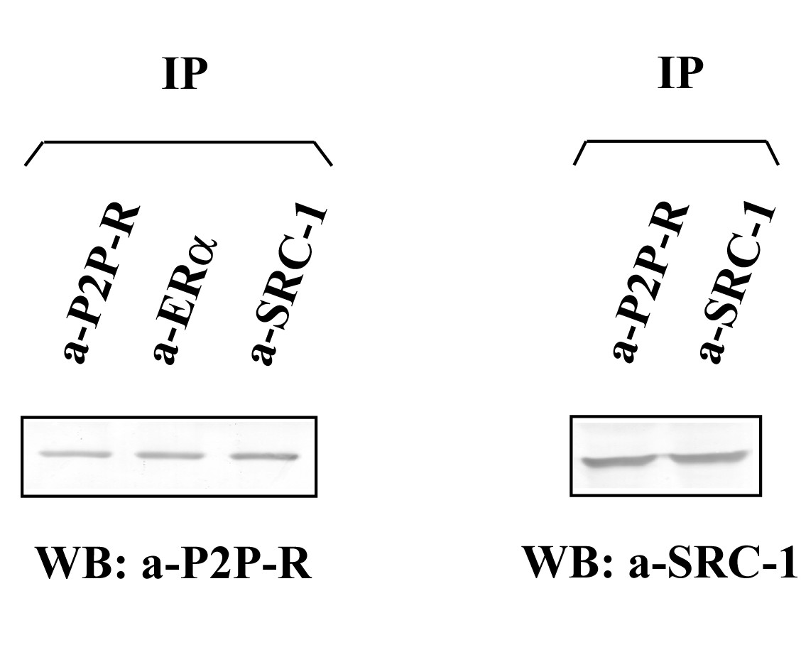 https://static-content.springer.com/image/art%3A10.1186%2F1752-0509-4-14/MediaObjects/12918_2009_Article_403_Fig7_HTML.jpg