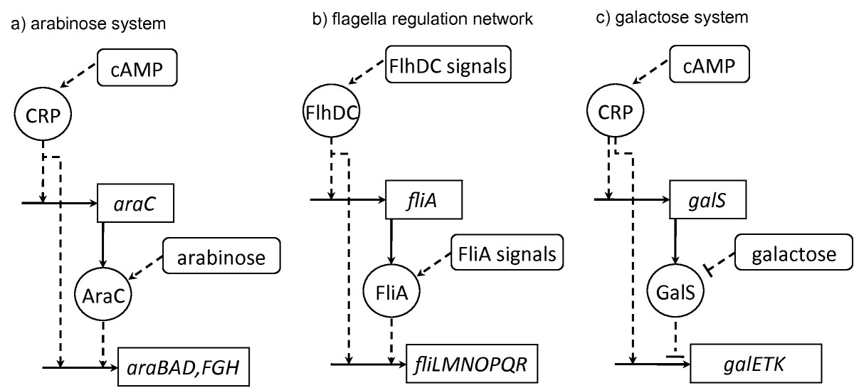 https://static-content.springer.com/image/art%3A10.1186%2F1752-0509-4-18/MediaObjects/12918_2009_Article_407_Fig3_HTML.jpg