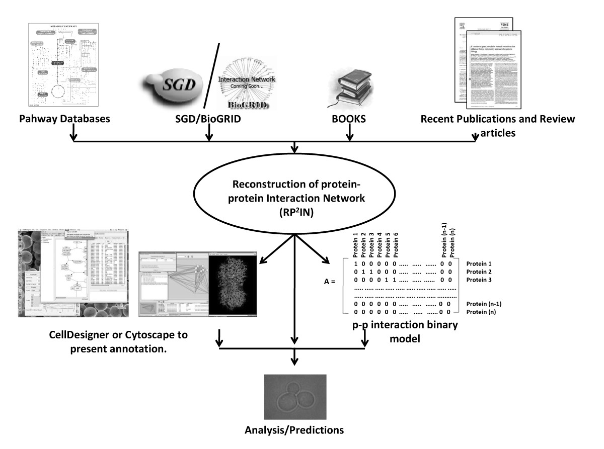 https://static-content.springer.com/image/art%3A10.1186%2F1752-0509-4-68/MediaObjects/12918_2009_Article_457_Fig1_HTML.jpg