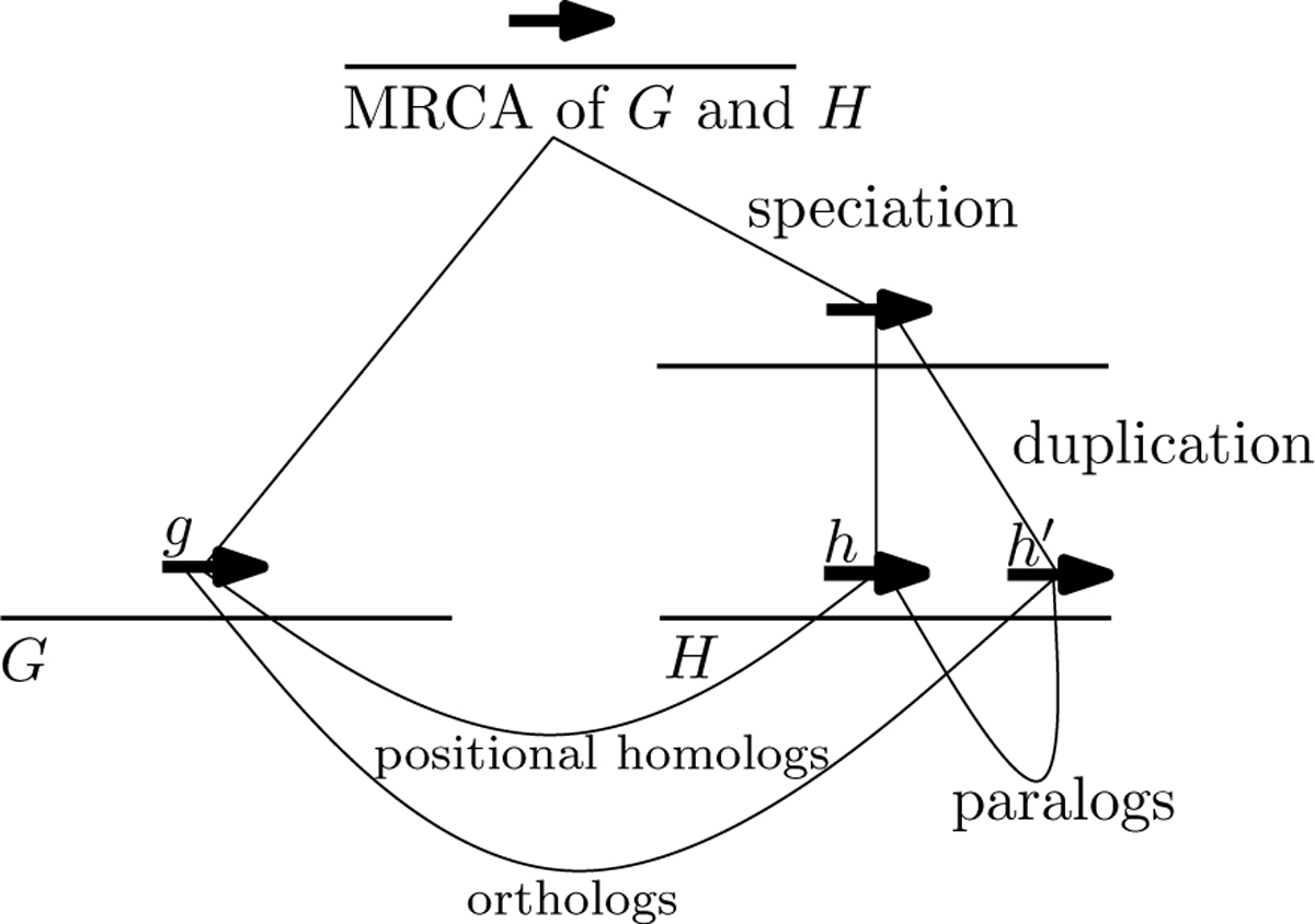 https://static-content.springer.com/image/art%3A10.1186%2F1752-0509-6-S1-S22/MediaObjects/12918_2012_Article_891_Fig1_HTML.jpg