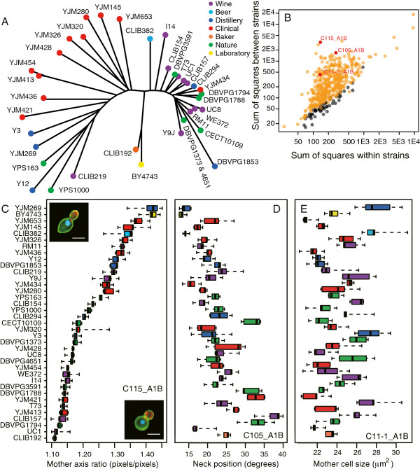https://static-content.springer.com/image/art%3A10.1186%2F1752-0509-7-54/MediaObjects/12918_2012_Article_1109_Fig1_HTML.jpg