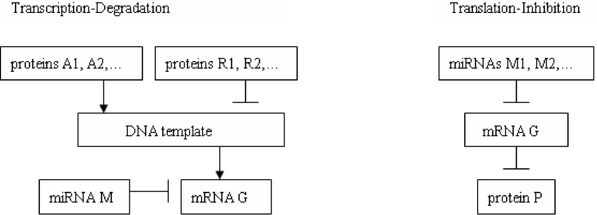 https://static-content.springer.com/image/art%3A10.1186%2F1752-0509-8-19/MediaObjects/12918_2013_Article_1286_Fig1_HTML.jpg