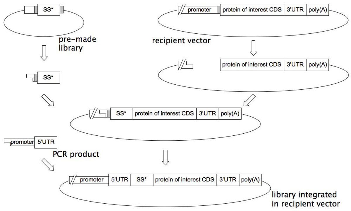 https://static-content.springer.com/image/art%3A10.1186%2F1753-6561-5-S8-O13/MediaObjects/12919_2011_Article_917_Fig1_HTML.jpg