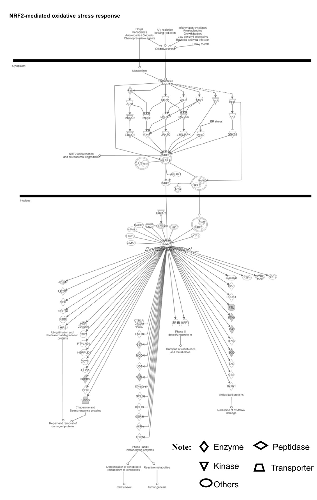 https://static-content.springer.com/image/art%3A10.1186%2F1755-8794-3-13/MediaObjects/12920_2009_Article_148_Fig4_HTML.jpg