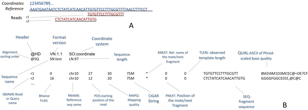 https://static-content.springer.com/image/art%3A10.1186%2F1756-0381-6-13/MediaObjects/13040_2013_Article_92_Fig8_HTML.jpg