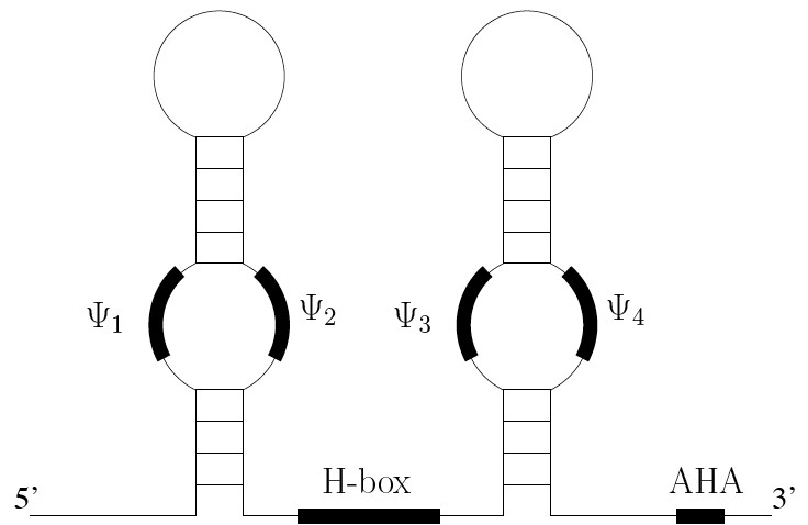 https://static-content.springer.com/image/art%3A10.1186%2F1756-0500-1-49/MediaObjects/13104_2008_Article_49_Fig1_HTML.jpg