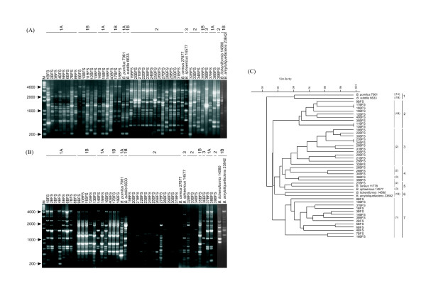 https://static-content.springer.com/image/art%3A10.1186%2F1756-0500-1-92/MediaObjects/13104_2008_Article_92_Fig4_HTML.jpg