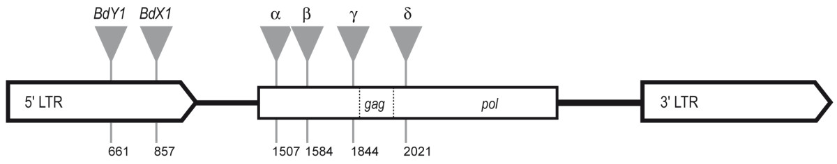 https://static-content.springer.com/image/art%3A10.1186%2F1756-0500-3-166/MediaObjects/13104_2010_Article_570_Fig2_HTML.jpg