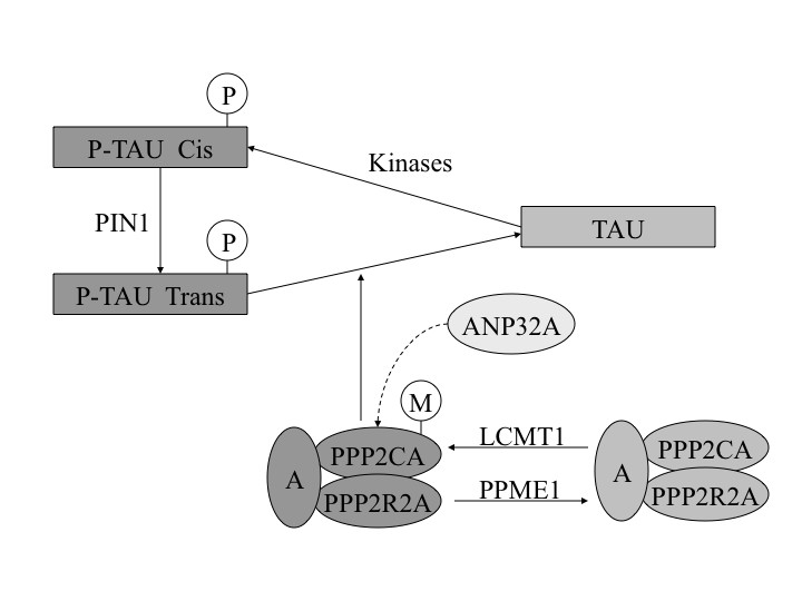 https://static-content.springer.com/image/art%3A10.1186%2F1756-0500-4-327/MediaObjects/13104_2011_Article_1074_Fig1_HTML.jpg