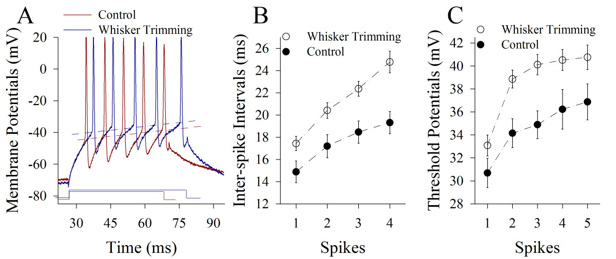 https://static-content.springer.com/image/art%3A10.1186%2F1756-6606-6-2/MediaObjects/13041_2012_Article_187_Fig6_HTML.jpg