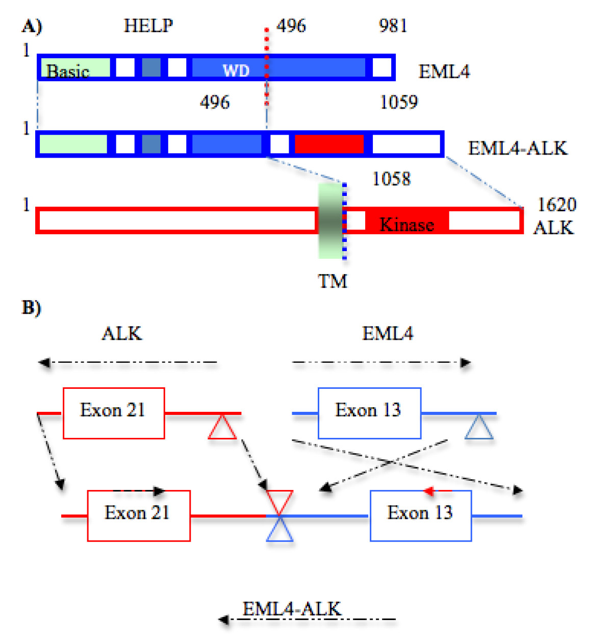 https://static-content.springer.com/image/art%3A10.1186%2F1756-8722-4-16/MediaObjects/13045_2011_Article_154_Fig2_HTML.jpg