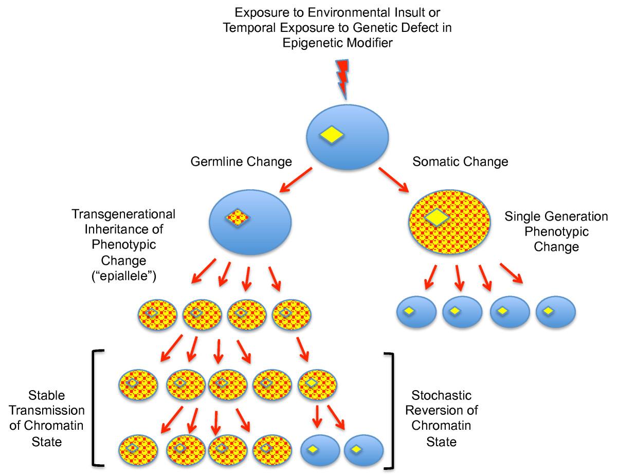 a report on transgenerational epigenetic inheritance the transmittance of information between genera