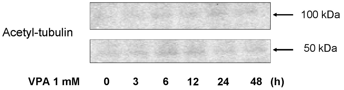 https://static-content.springer.com/image/art%3A10.1186%2F1756-9966-29-149/MediaObjects/13046_2010_Article_396_Fig7_HTML.jpg