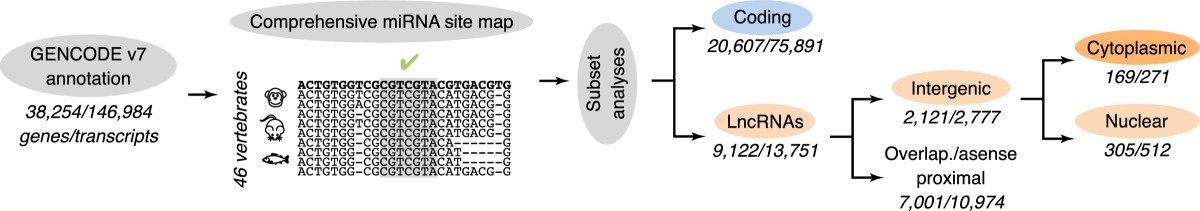 https://static-content.springer.com/image/art%3A10.1186%2F1758-907X-4-4/MediaObjects/13101_2013_Article_38_Fig1_HTML.jpg