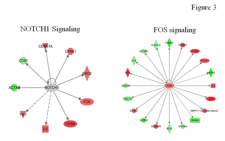 https://static-content.springer.com/image/art%3A10.1186%2F2001-1326-1-26/MediaObjects/40169_2012_Article_30_Fig3_HTML.jpg