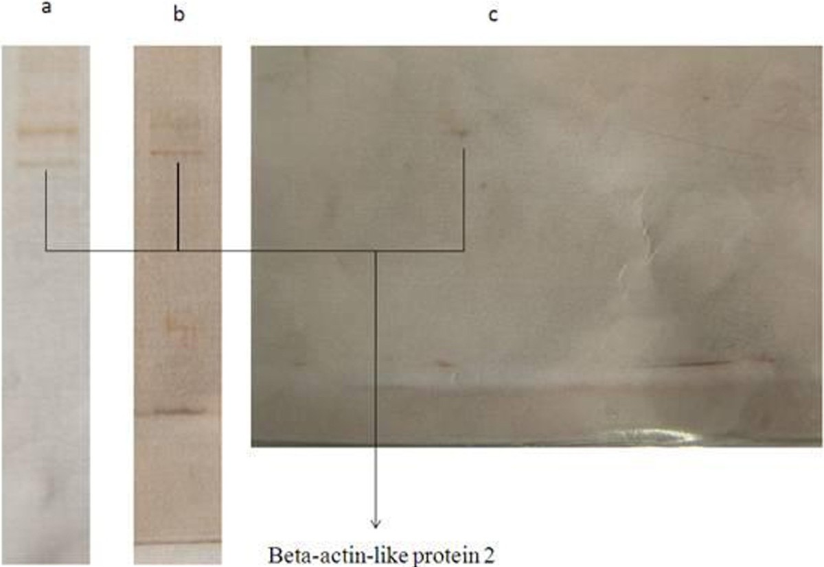 https://static-content.springer.com/image/art%3A10.1186%2F2008-2231-21-25/MediaObjects/40199_2013_Article_125_Fig4_HTML.jpg