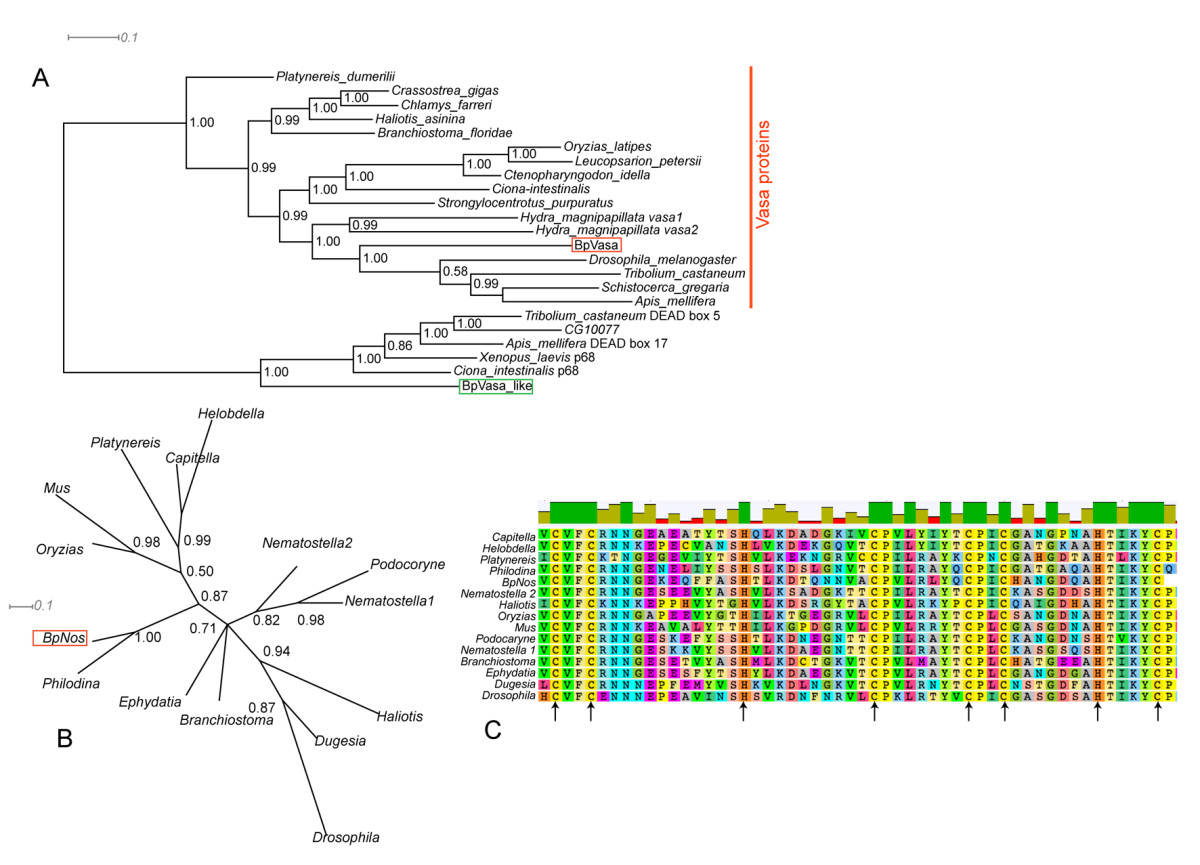 https://static-content.springer.com/image/art%3A10.1186%2F2041-9139-1-5/MediaObjects/13227_2009_Article_5_Fig2_HTML.jpg