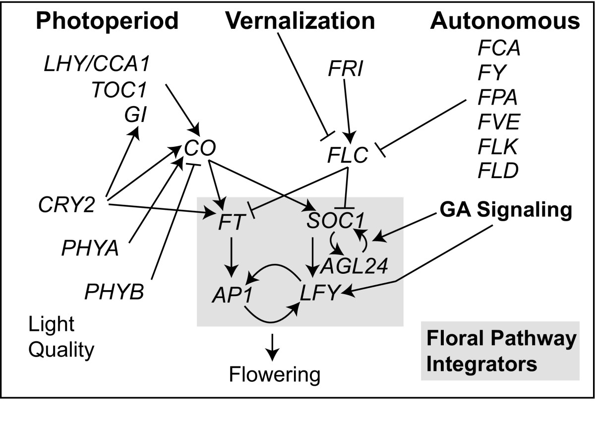 https://static-content.springer.com/image/art%3A10.1186%2F2041-9139-2-4/MediaObjects/13227_2011_Article_18_Fig1_HTML.jpg