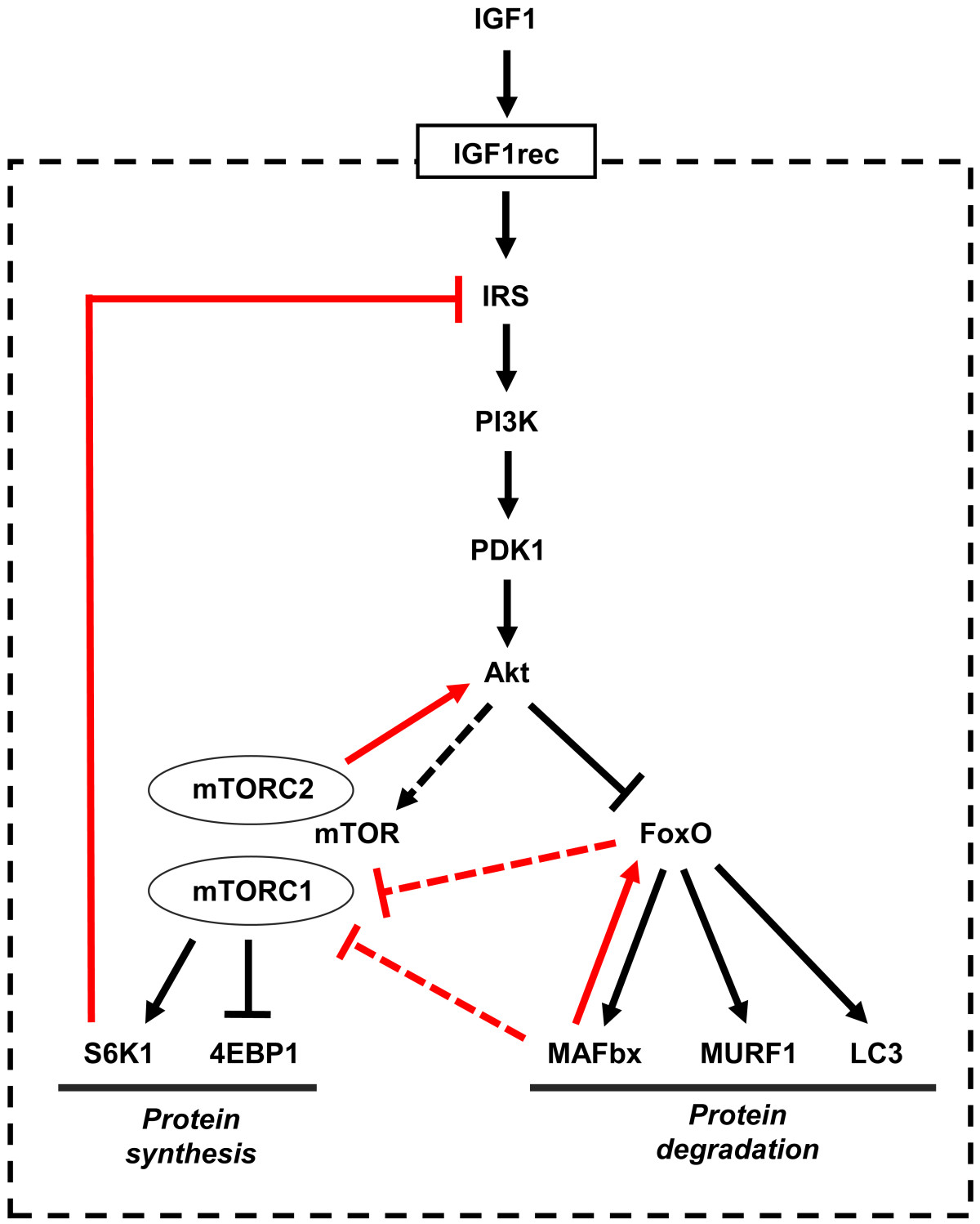 https://static-content.springer.com/image/art%3A10.1186%2F2044-5040-1-4/MediaObjects/13395_2010_Article_4_Fig1_HTML.jpg