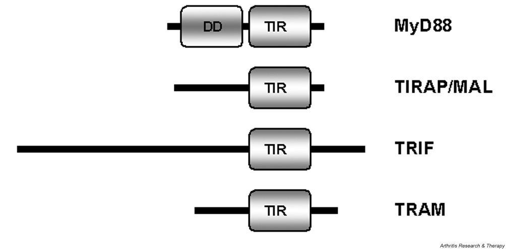 https://static-content.springer.com/image/art%3A10.1186%2Far1469/MediaObjects/13075_2004_Article_1350_Fig2_HTML.jpg