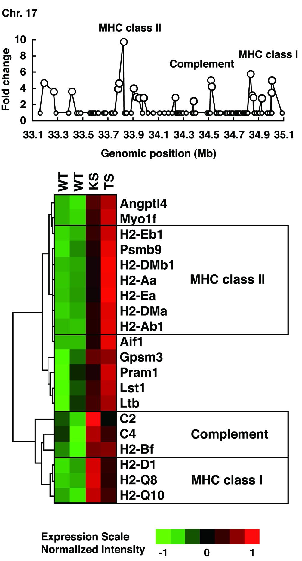 https://static-content.springer.com/image/art%3A10.1186%2Far1985/MediaObjects/13075_2006_Article_1863_Fig4_HTML.jpg