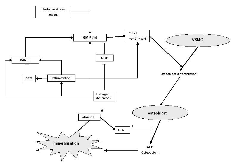 https://static-content.springer.com/image/art%3A10.1186%2Far3224/MediaObjects/13075_2010_Article_2982_Fig2_HTML.jpg