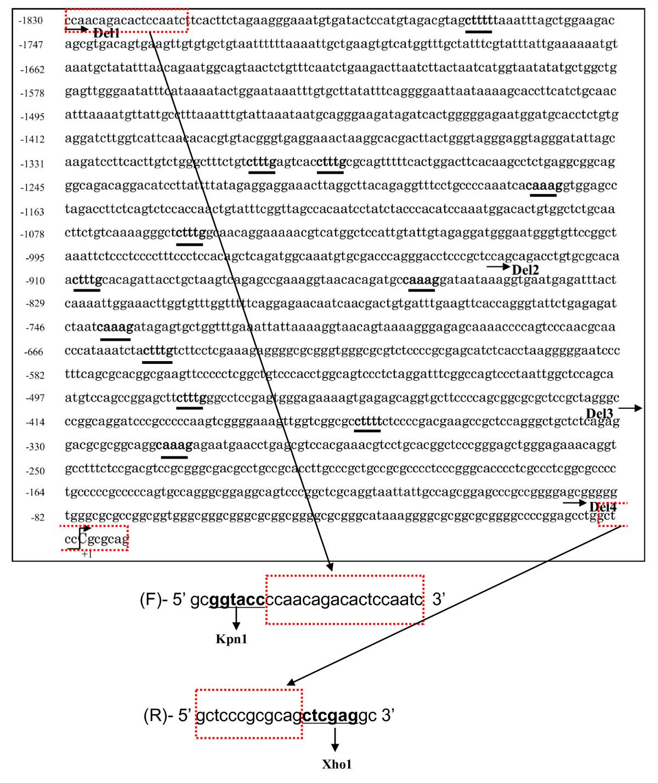 https://static-content.springer.com/image/art%3A10.1186%2Far3830/MediaObjects/13075_2011_Article_3574_Fig3_HTML.jpg