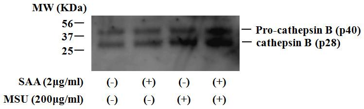 https://static-content.springer.com/image/art%3A10.1186%2Far3849/MediaObjects/13075_2011_Article_3594_Fig6_HTML.jpg