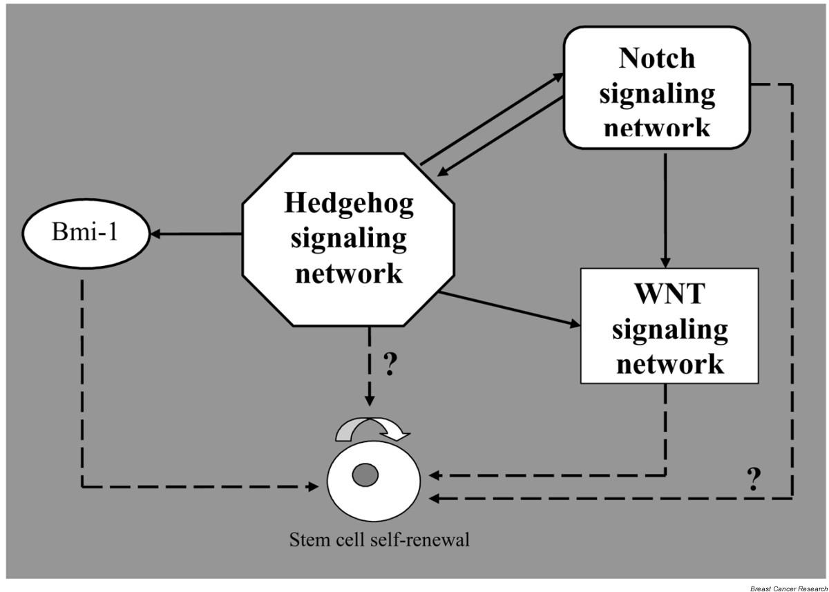 https://static-content.springer.com/image/art%3A10.1186%2Fbcr1021/MediaObjects/13058_2005_Article_1019_Fig5_HTML.jpg
