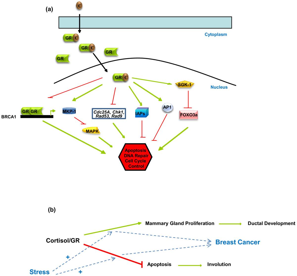 https://static-content.springer.com/image/art%3A10.1186%2Fbcr2836/MediaObjects/13058_2011_2667_Fig2_HTML.jpg