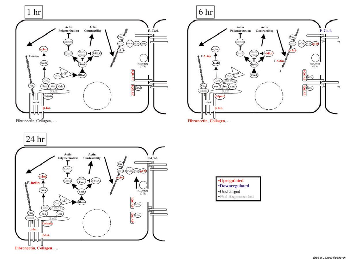 https://static-content.springer.com/image/art%3A10.1186%2Fbcr640/MediaObjects/13058_2003_Article_642_Fig6_HTML.jpg