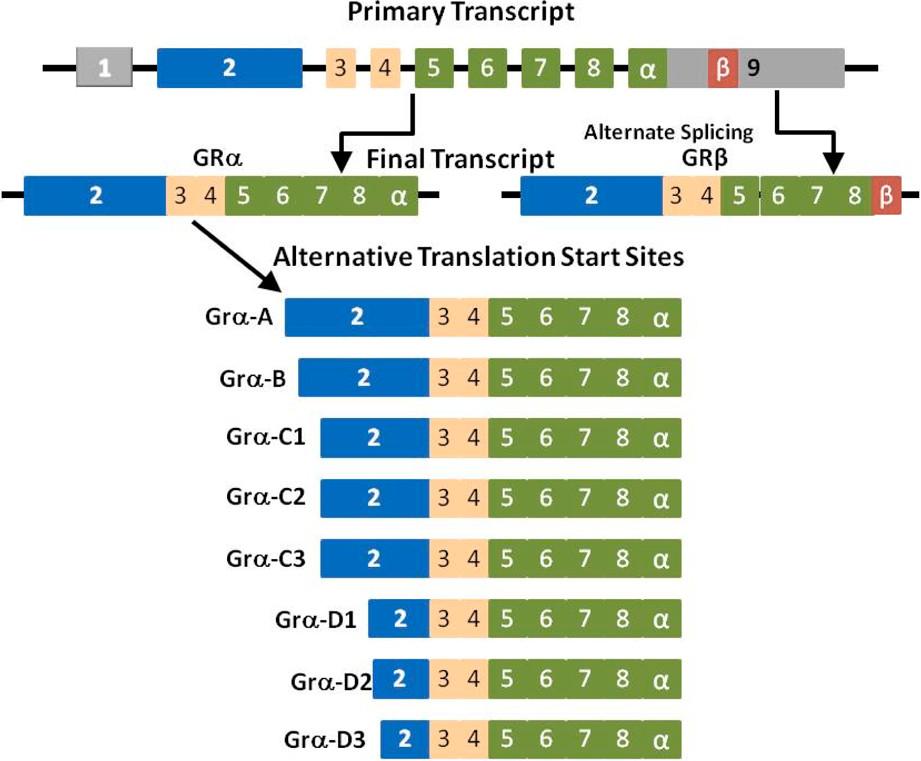 https://static-content.springer.com/image/art%3A10.1186%2Fcc12723/MediaObjects/13054_2013_Article_1860_Fig1_HTML.jpg