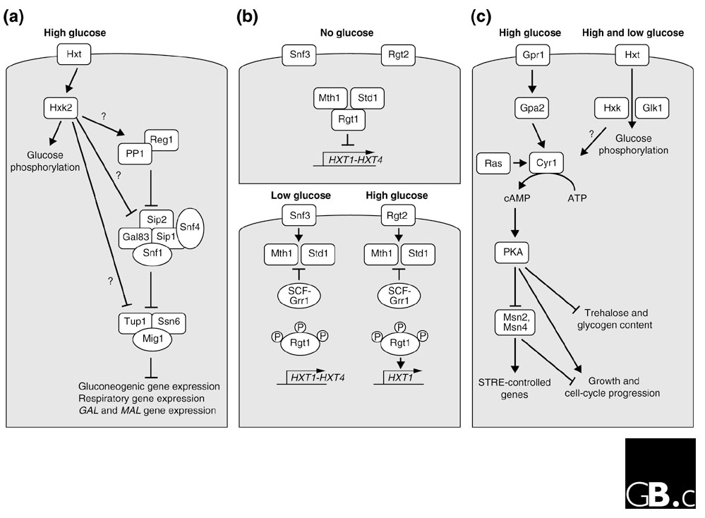 https://static-content.springer.com/image/art%3A10.1186%2Fgb-2003-4-11-233/MediaObjects/13059_2003_Article_647_Fig1_HTML.jpg