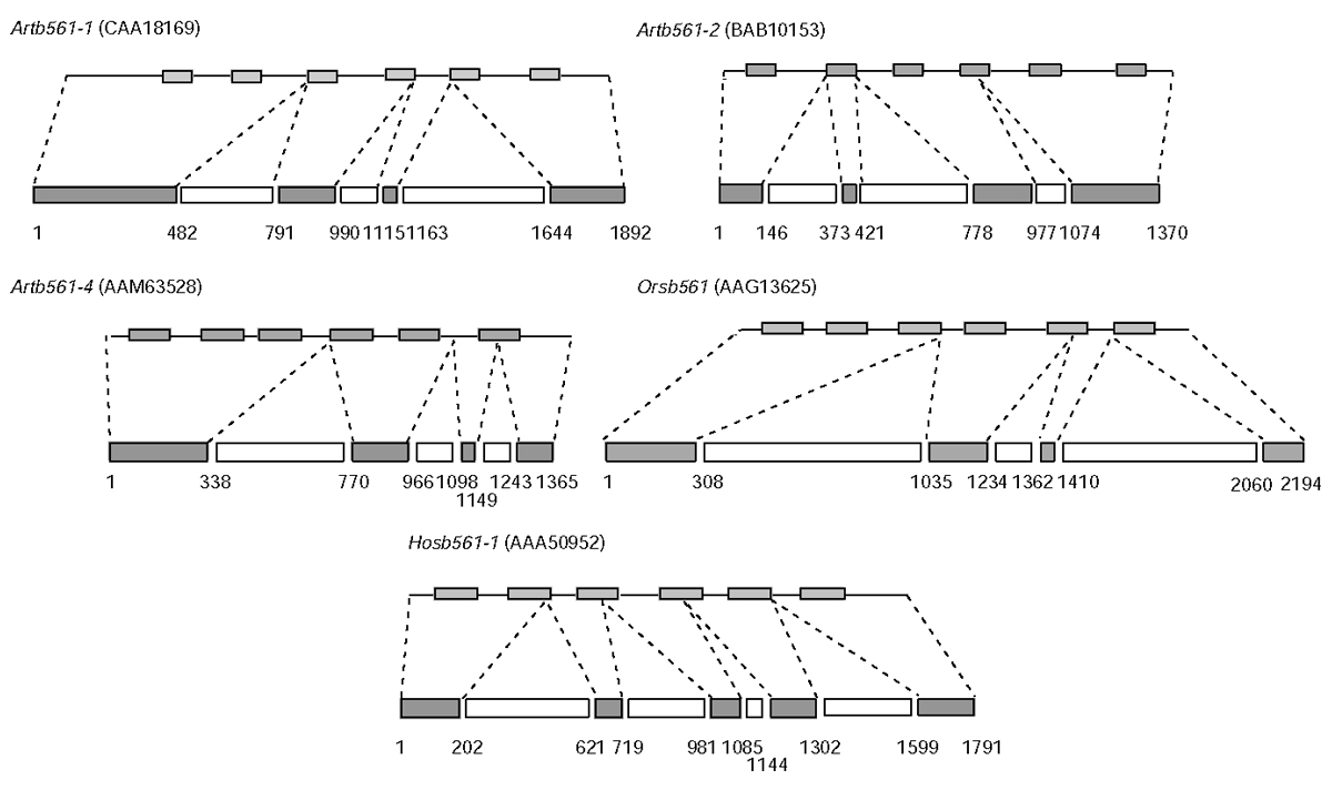 https://static-content.springer.com/image/art%3A10.1186%2Fgb-2003-4-6-r38/MediaObjects/13059_2003_Article_548_Fig2_HTML.jpg