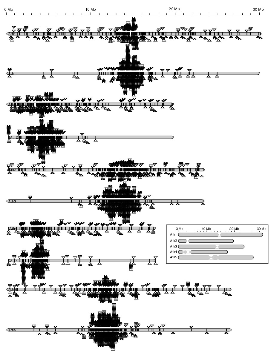 https://static-content.springer.com/image/art%3A10.1186%2Fgb-2004-5-10-r78/MediaObjects/13059_2004_Article_882_Fig4_HTML.jpg