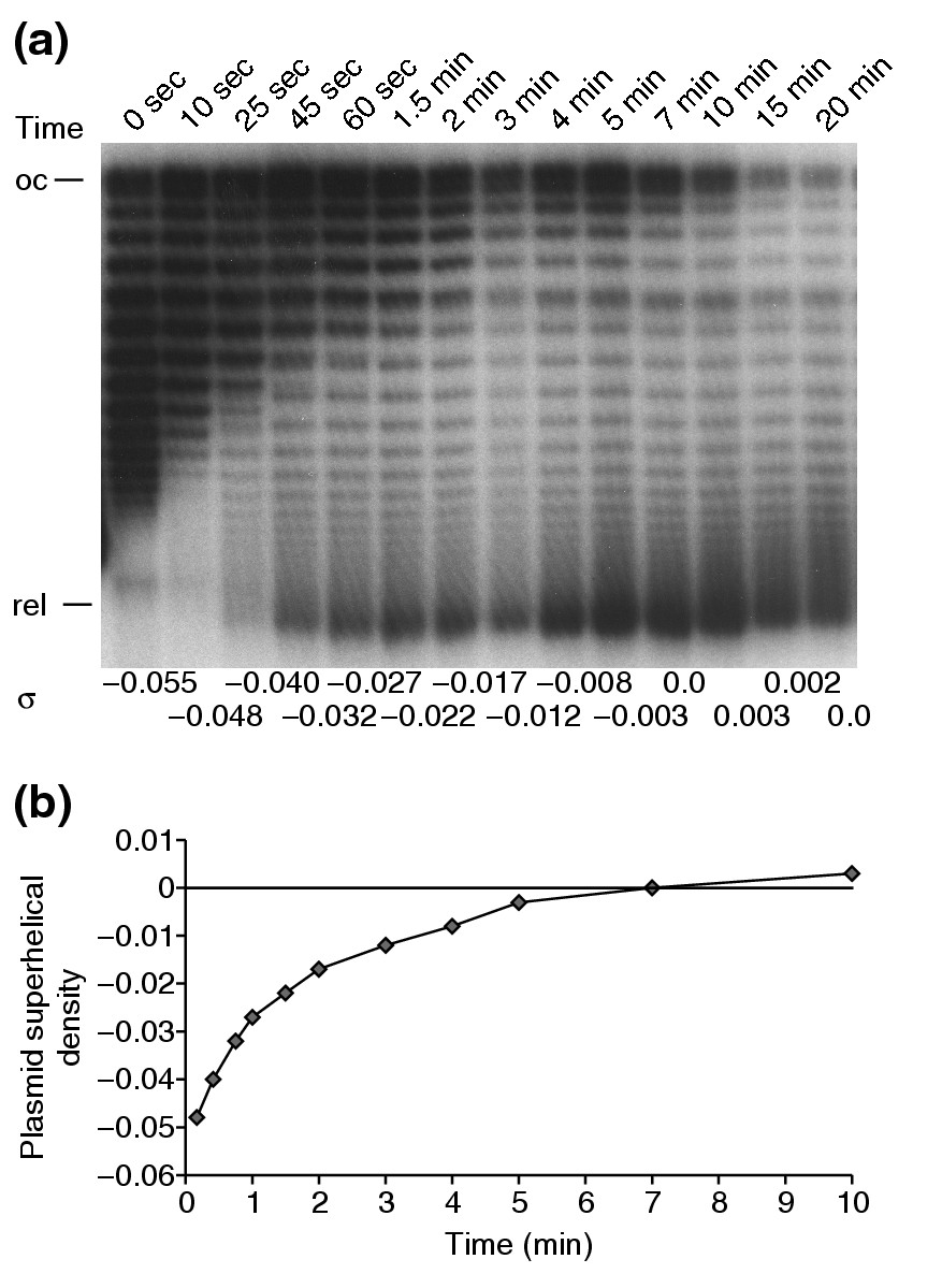 https://static-content.springer.com/image/art%3A10.1186%2Fgb-2004-5-11-r87/MediaObjects/13059_2004_Article_891_Fig3_HTML.jpg