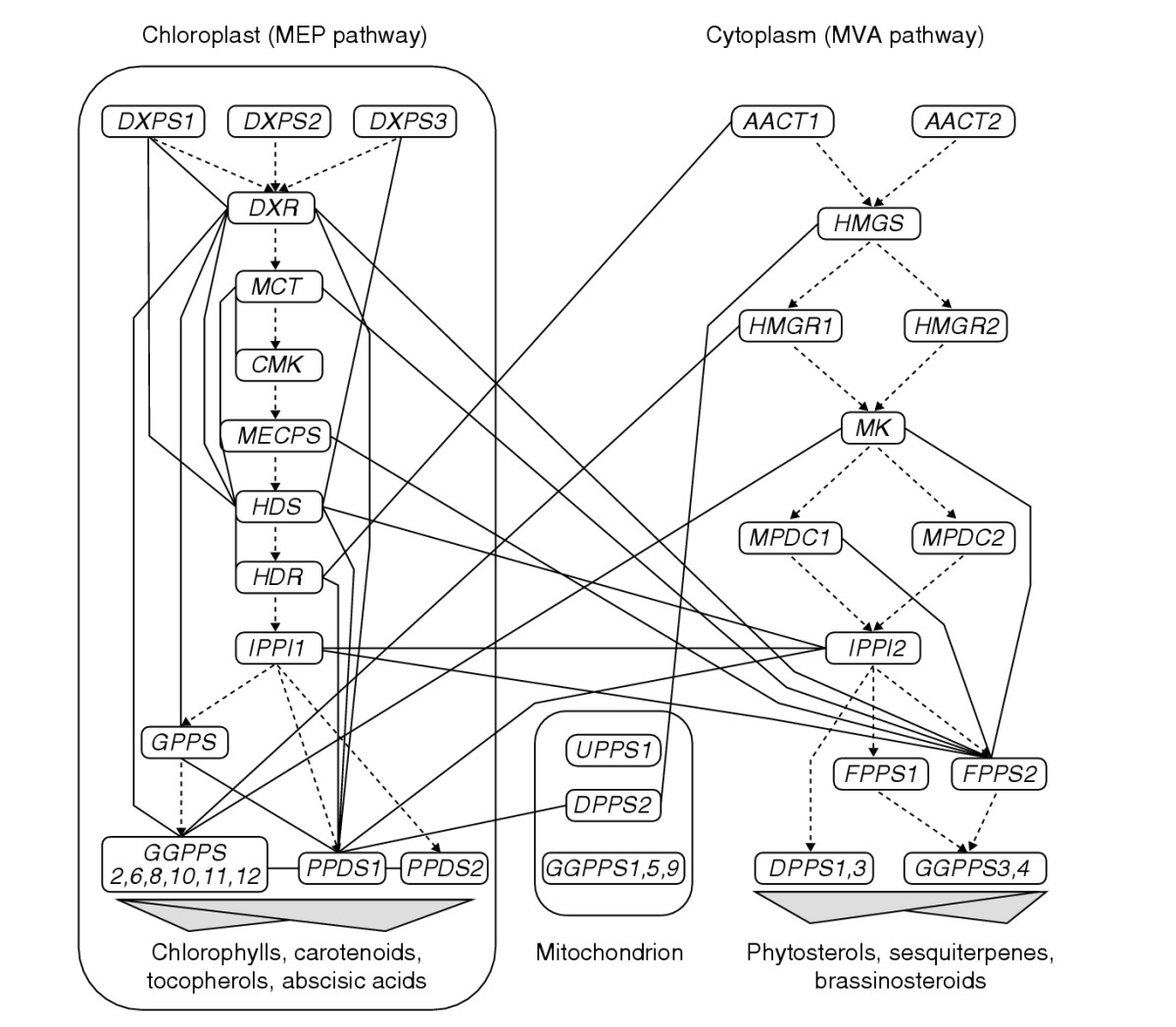 https://static-content.springer.com/image/art%3A10.1186%2Fgb-2004-5-11-r92/MediaObjects/13059_2004_Article_896_Fig2_HTML.jpg