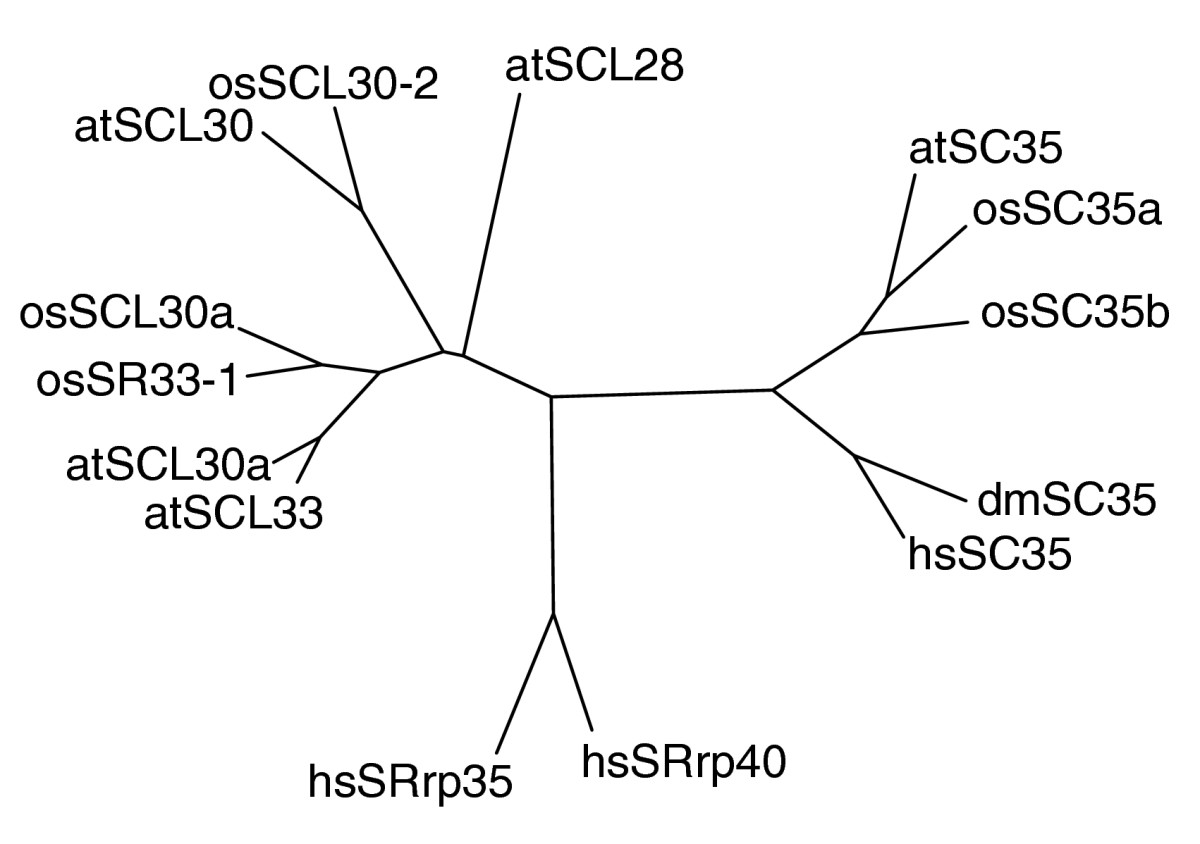 https://static-content.springer.com/image/art%3A10.1186%2Fgb-2004-5-12-r102/MediaObjects/13059_2004_Article_906_Fig3_HTML.jpg