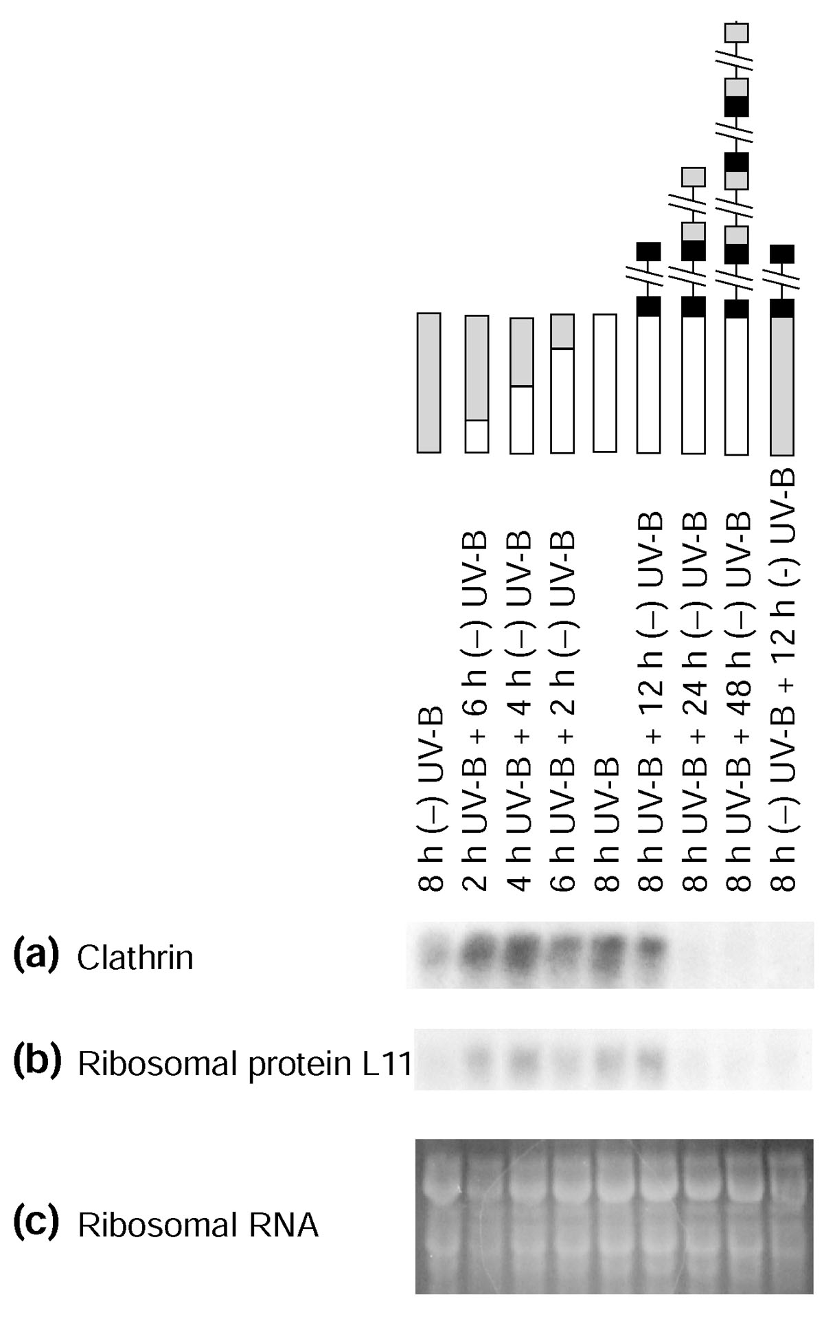 https://static-content.springer.com/image/art%3A10.1186%2Fgb-2004-5-3-r16/MediaObjects/13059_2003_Article_820_Fig9_HTML.jpg