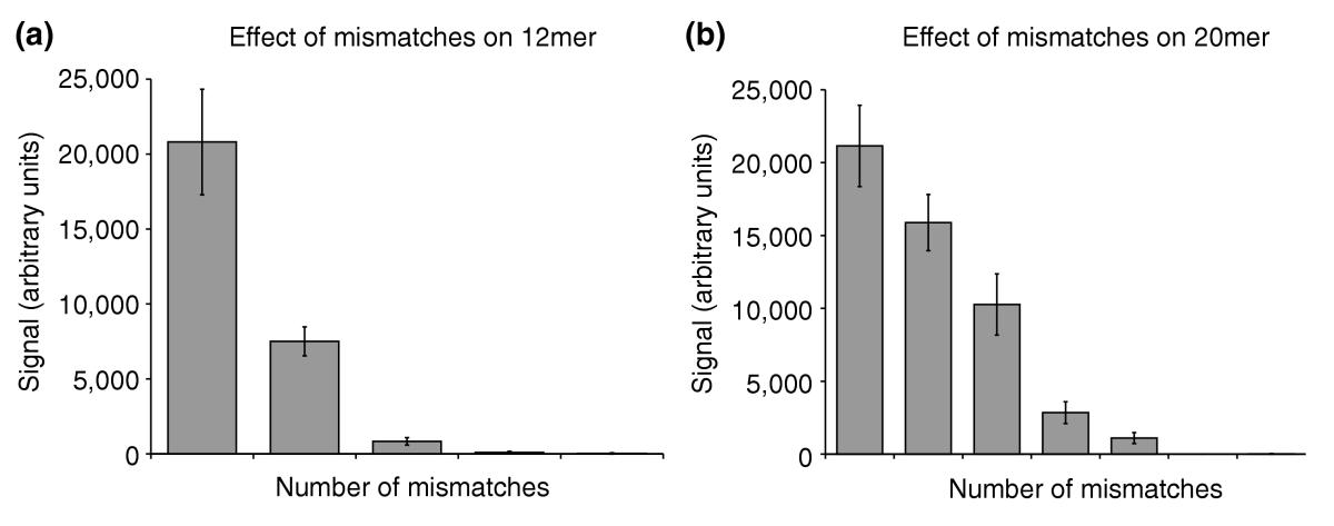 https://static-content.springer.com/image/art%3A10.1186%2Fgb-2004-5-8-r58/MediaObjects/13059_2004_Article_862_Fig7_HTML.jpg