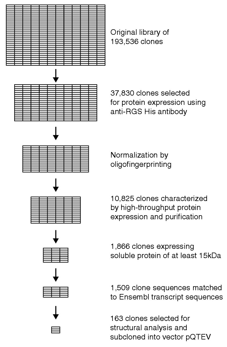 https://static-content.springer.com/image/art%3A10.1186%2Fgb-2004-5-9-r71/MediaObjects/13059_2004_Article_875_Fig1_HTML.jpg