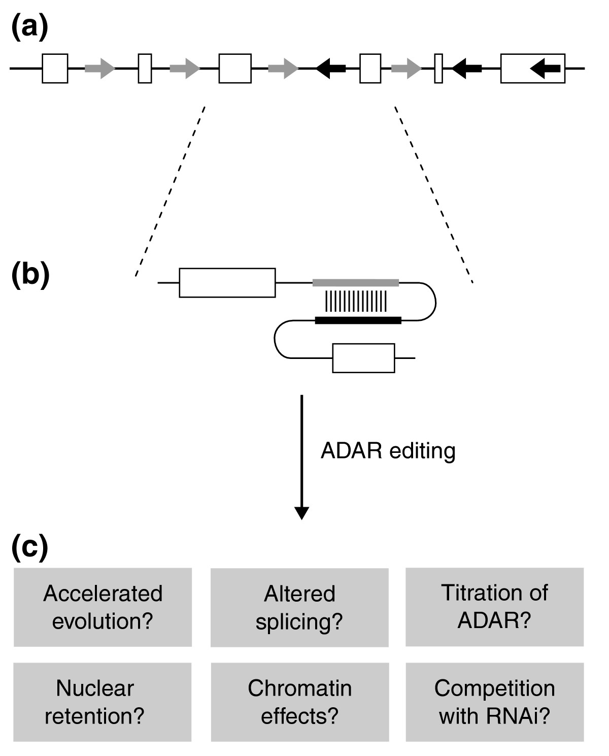 https://static-content.springer.com/image/art%3A10.1186%2Fgb-2005-6-4-216/MediaObjects/13059_2005_Article_960_Fig2_HTML.jpg