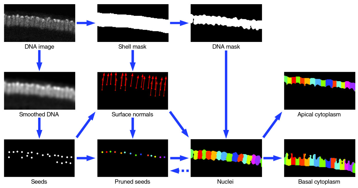 https://static-content.springer.com/image/art%3A10.1186%2Fgb-2006-7-12-r123/MediaObjects/13059_2006_Article_1391_Fig11_HTML.jpg