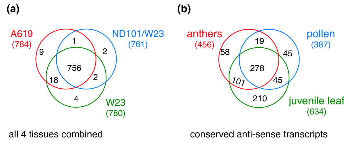 https://static-content.springer.com/image/art%3A10.1186%2Fgb-2006-7-3-r22/MediaObjects/13059_2005_Article_1290_Fig5_HTML.jpg