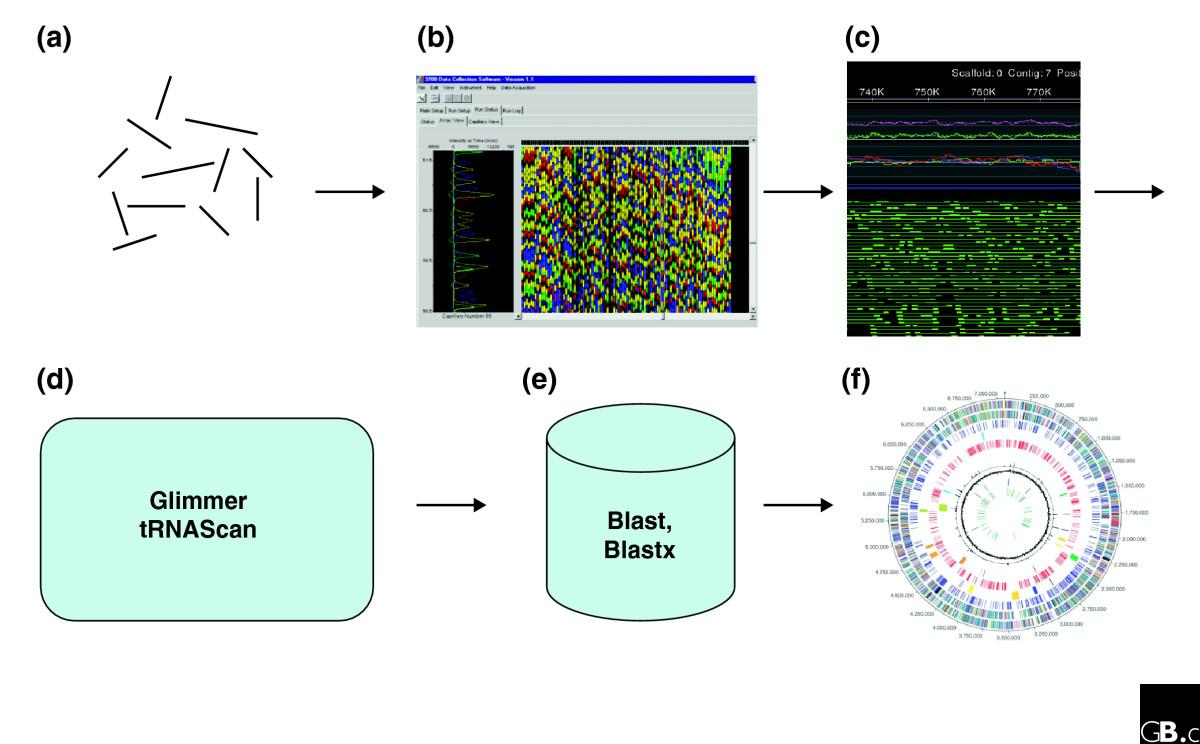 https://static-content.springer.com/image/art%3A10.1186%2Fgb-2007-8-1-102/MediaObjects/13059_2007_Article_1409_Fig1_HTML.jpg