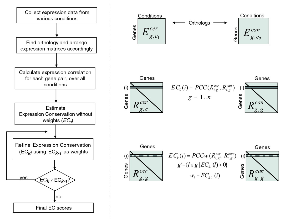 https://static-content.springer.com/image/art%3A10.1186%2Fgb-2007-8-4-r50/MediaObjects/13059_2006_Article_1532_Fig1_HTML.jpg