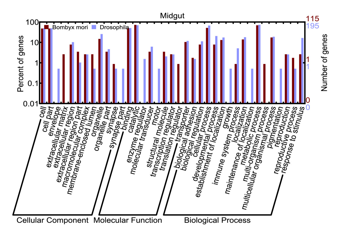 https://static-content.springer.com/image/art%3A10.1186%2Fgb-2007-8-8-r162/MediaObjects/13059_2007_Article_1643_Fig6_HTML.jpg