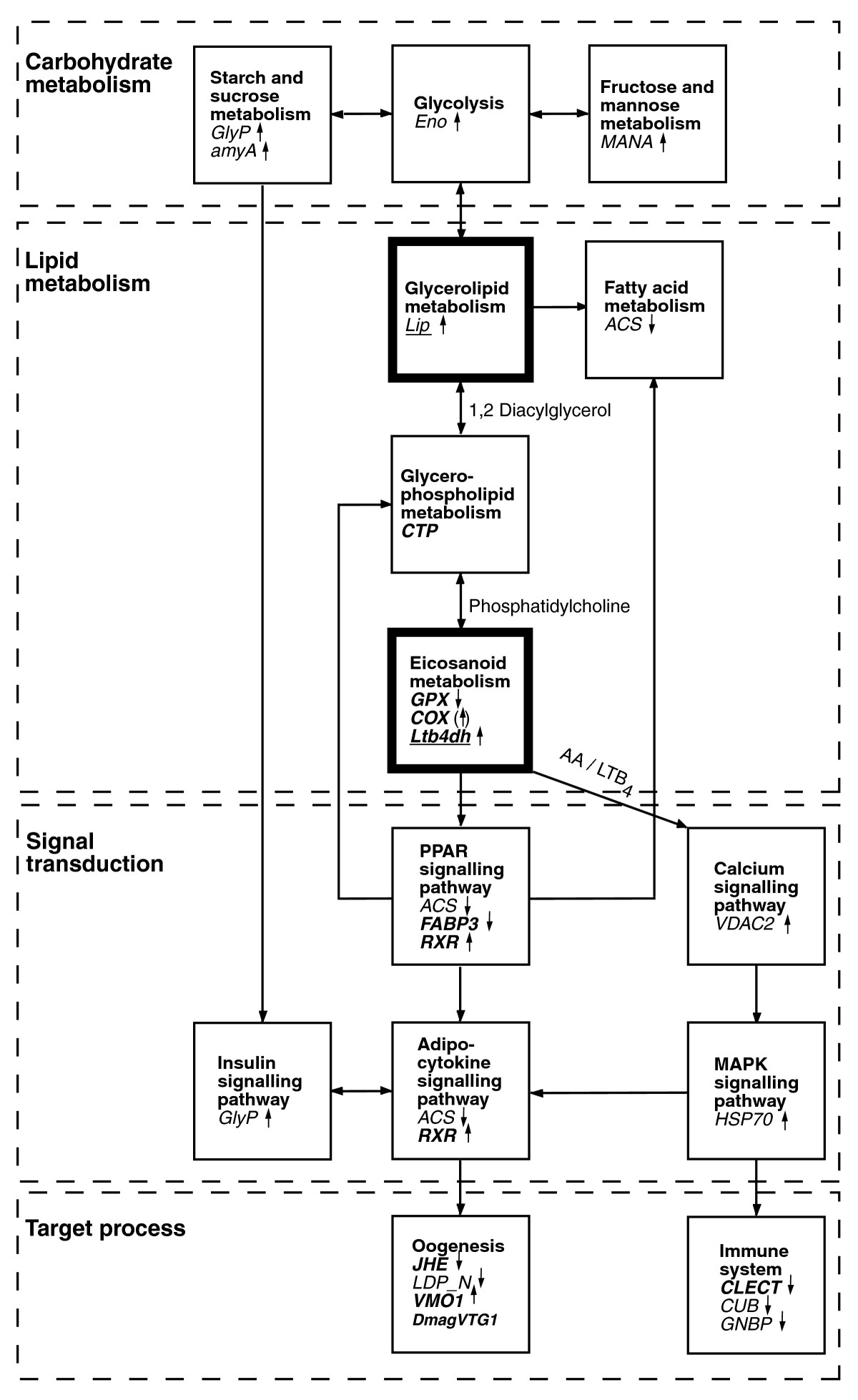 https://static-content.springer.com/image/art%3A10.1186%2Fgb-2008-9-2-r40/MediaObjects/13059_2007_Article_1902_Fig3_HTML.jpg