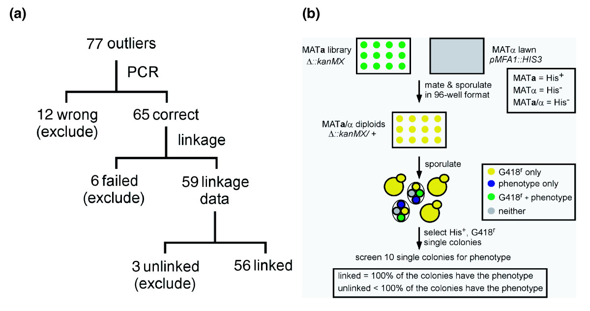https://static-content.springer.com/image/art%3A10.1186%2Fgb-2008-9-9-r140/MediaObjects/13059_2008_Article_2002_Fig2_HTML.jpg